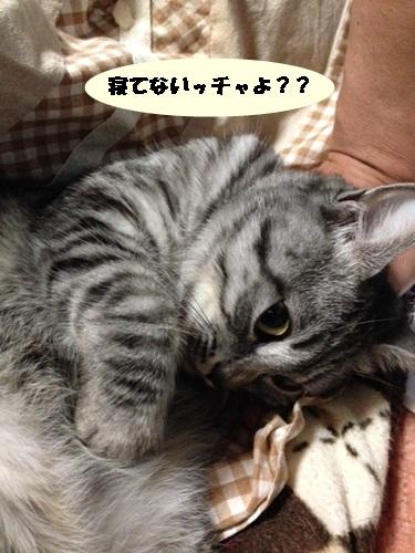 89_201312112238219c9.jpg