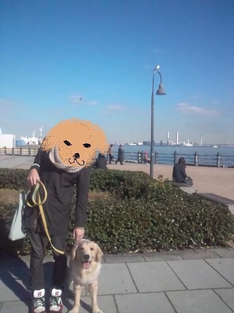 犬赤レンガ