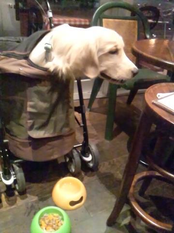 KAHARA犬ご飯