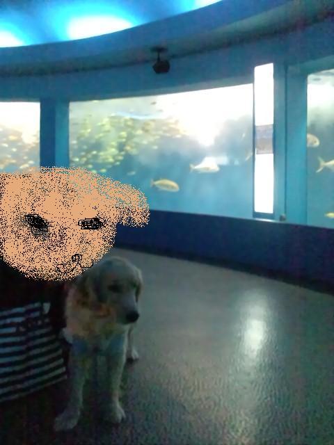 油壺水族館.