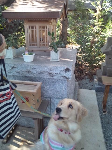 犬猫神社ご神体