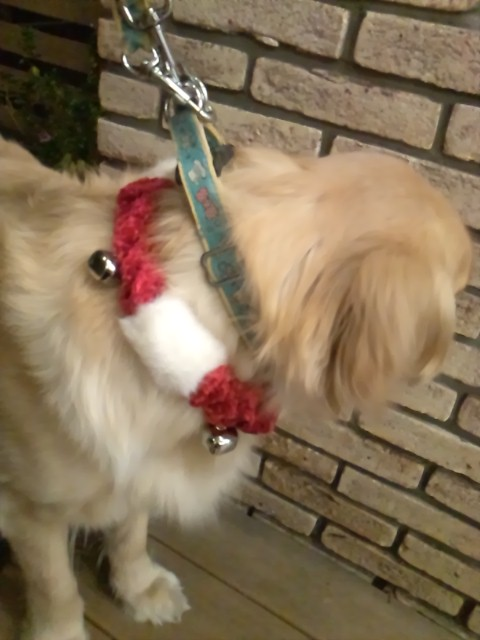 holiday pet bell collar