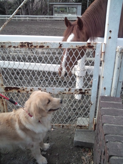 馬とニアミス