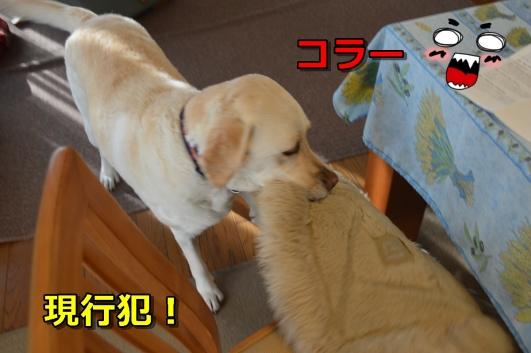 DSC_0569-027.jpg