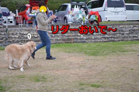 DSC_1517-007.jpg