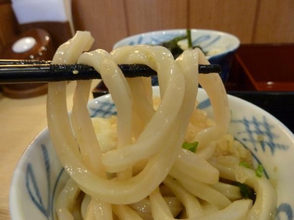 うどん麺10