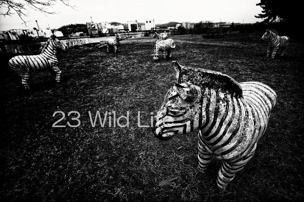 _DSC6217-Edit.jpg