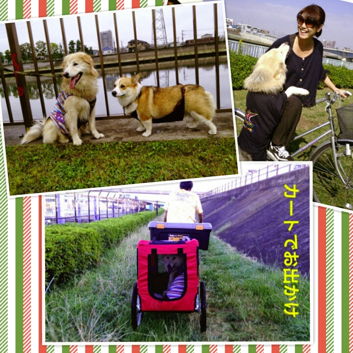 PhotoGrid_1374556227520.jpg