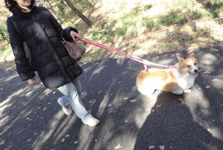お散歩会9
