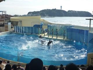 江ノ水イルカショー