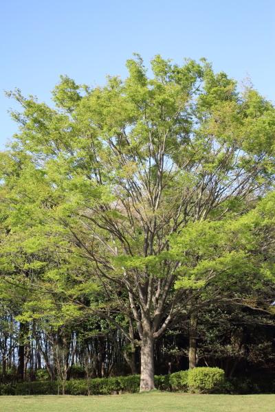 IMG_1241緑のふるさと公園緑のふるさと公園