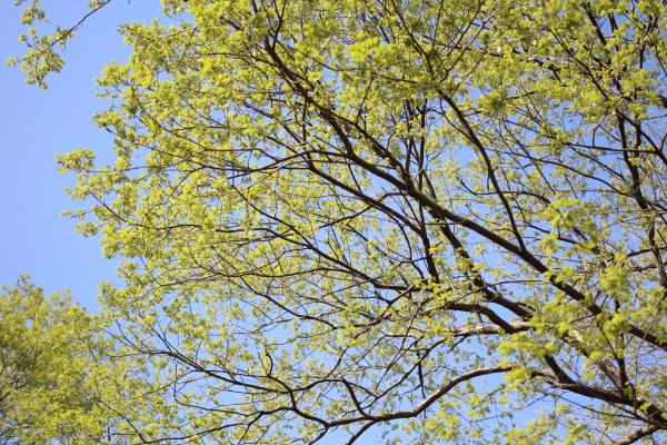 IMG_1232緑のふるさと公園緑のふるさと公園