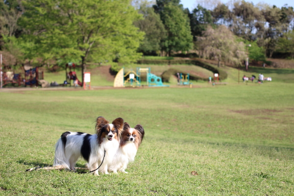 IMG_1239緑のふるさと公園緑のふるさと公園
