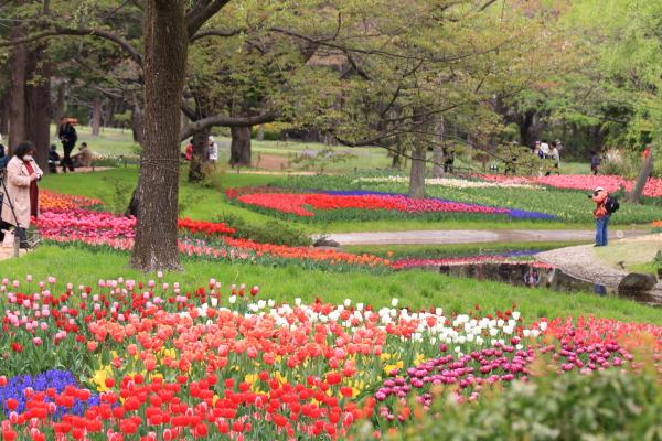 IMG_8934昭和記念公園2013昭和記念公園2013