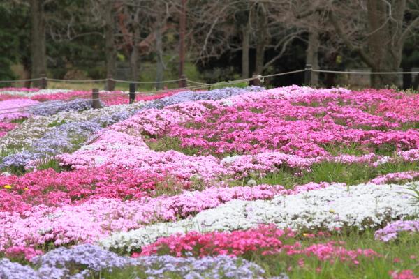 IMG_8862昭和記念公園2013昭和記念公園2013