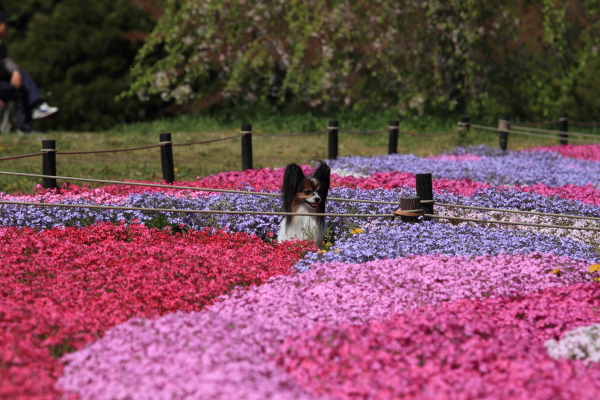 昭和記念公園 ブログサイズ0011