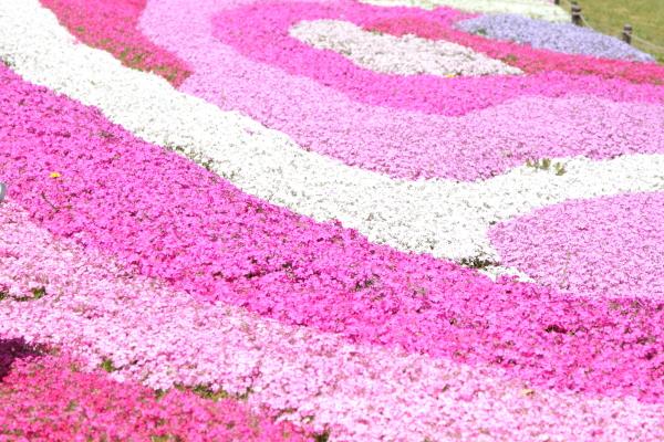 昭和記念公園 ブログサイズ0001