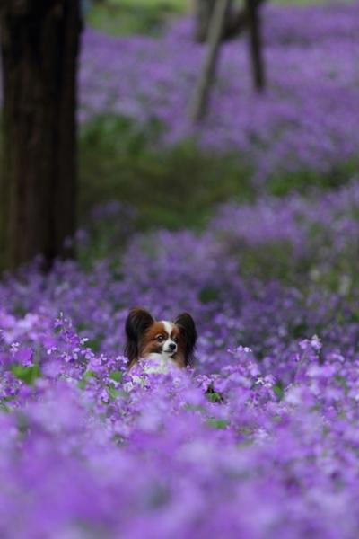 昭和記念公園 ブログサイズ0203
