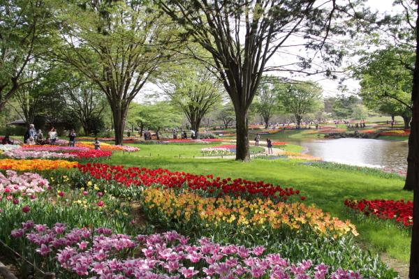 IMG_1365昭和記念公園2昭和記念公園2
