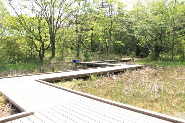 IMG_1325昭和記念公園2昭和記念公園2