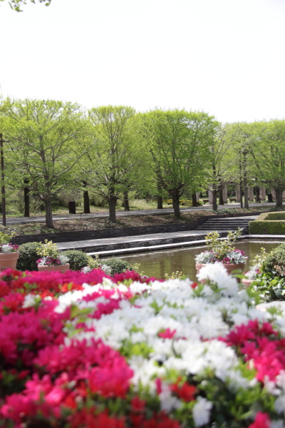 IMG_1302昭和記念公園2昭和記念公園2