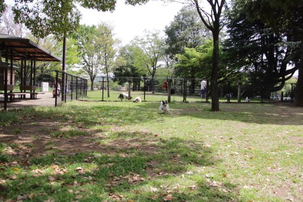 IMG_1294昭和記念公園2昭和記念公園2
