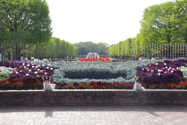 IMG_1420昭和記念公園2昭和記念公園2