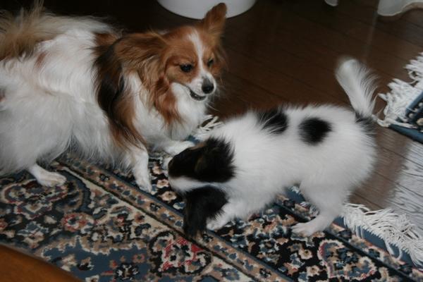 デュークとエル 2007年