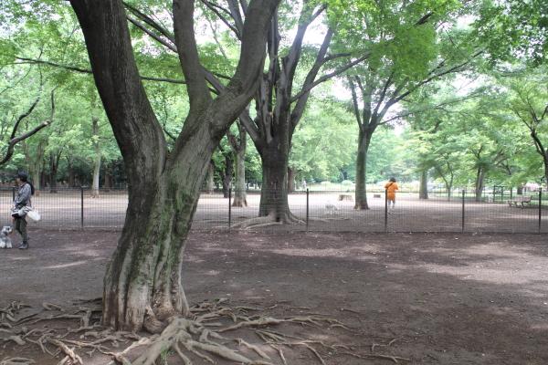 IMG_9752代々木公園代々木公園