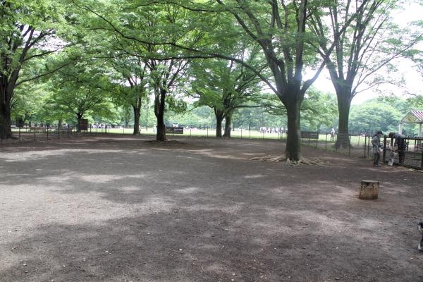 IMG_9758代々木公園代々木公園