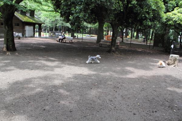 IMG_9755代々木公園代々木公園
