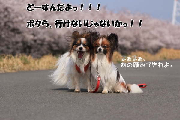 IMG_1163東京ブロック 訓練競技会 2013_東京ブロック 訓練競技会 2013_