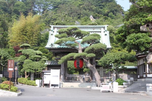 IMG_0315鎌倉にて鎌倉にて