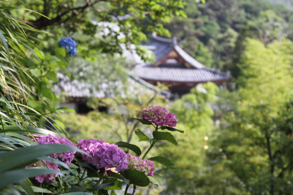 IMG_0369鎌倉にて鎌倉にて