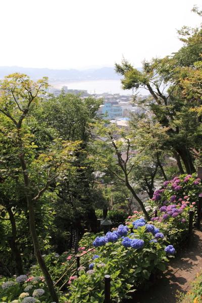 IMG_0342鎌倉にて鎌倉にて