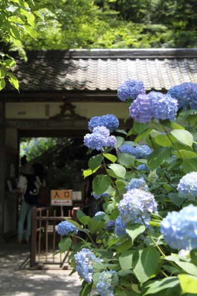 IMG_0453鎌倉にて鎌倉にて
