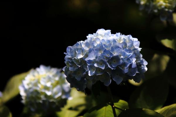 IMG_0569鎌倉にて鎌倉にて