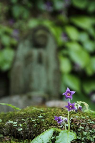 IMG_0601鎌倉にて鎌倉にて