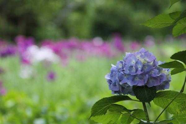 IMG_0630鎌倉にて鎌倉にて