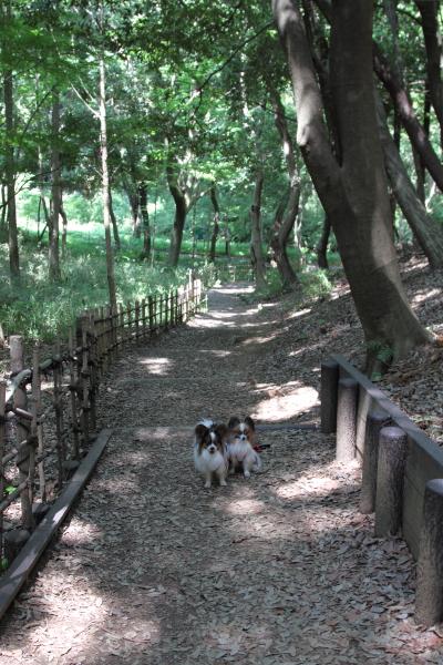 IMG_0291四季の森公園四季の森公園