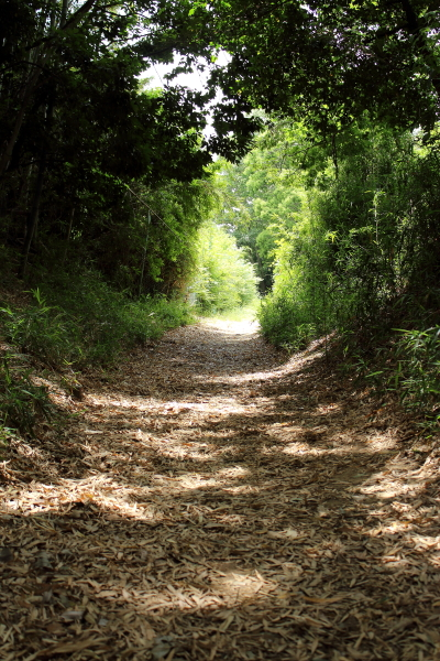 IMG_1690ふるさと公園四季の森公園