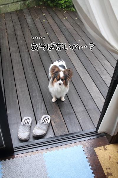 IMG_0918ホキホキ