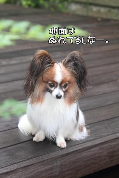 IMG_0924ホキホキ