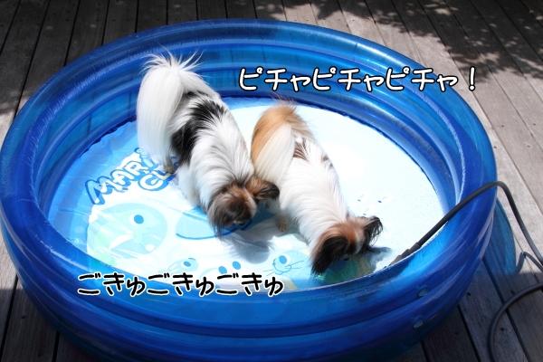 IMG_0947プール開きプール開き