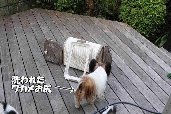 IMG_0972暑さ負け暑さ負け