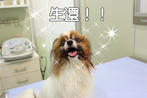IMG_1745駒澤 新横浜駒澤 新横浜