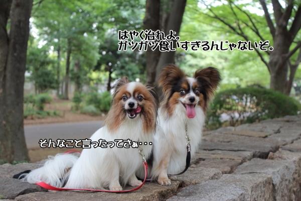 IMG_1756駒澤 新横浜駒澤 新横浜