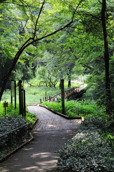 IMG_1861東高根森林公園東高根森林公園