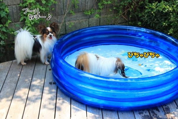 IMG_1920庭でプール庭でプール