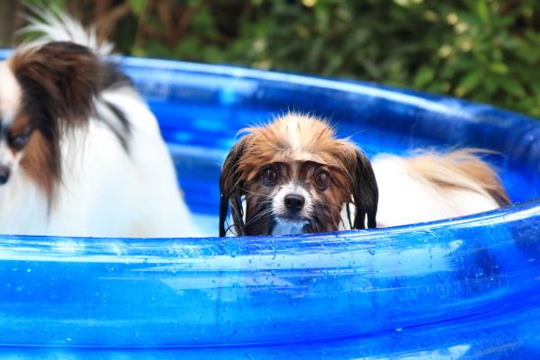 IMG_1930庭でプール庭でプール